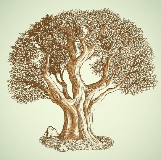 Oak Trees The Best For Fire Wood