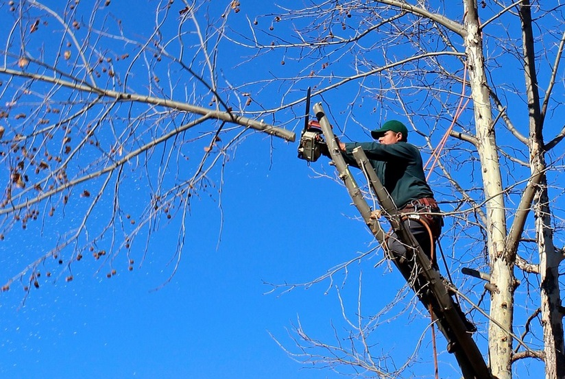 Arborist Using Chainsaw In Tree